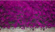 نبتة الجهنمية: طرق زراعتها والعناية بها