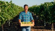 دليلك لتأسيس مشروع زراعة العنب