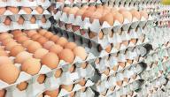 ما متطلبات تأسيس مشروع توزيع البيض؟