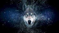 قصة فيلم ألفا: هل يمكن للإنسان أن يصادق ذئبًا؟