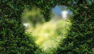 رسائل حكم عن الحب