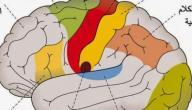 تعريف السيالة العصبية