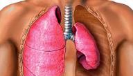 مما يتكون الجهاز التنفسي
