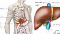 مكان الكبد بالجسم