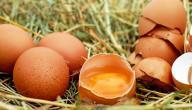 فوائد اكل البيض ني
