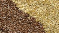فوائد بذرة الكتان واضرارها