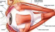 علاج ضعف العصب البصري