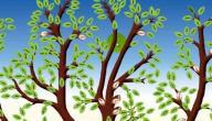 طريقة رسم شجرة العائلة