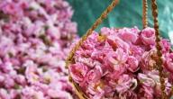 ما فوائد الورد الطائفي
