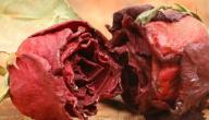 ما فوائد الورد الجوري المجفف