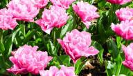 الفرق بين النباتات الزهرية واللازهرية