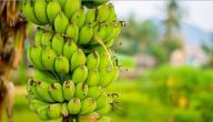 ما فوائد الموز في الصباح