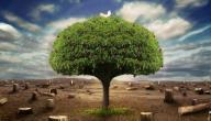 كيف نحافظ على الشجرة