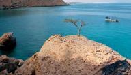 جزيرة سوقطرة اليمنية غرائب وعجائب