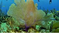 أسماء نباتات البحر