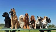 انواع كلاب العالم