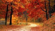 متى يبدأ الخريف