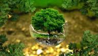 المحافظة على نظافة البيئة