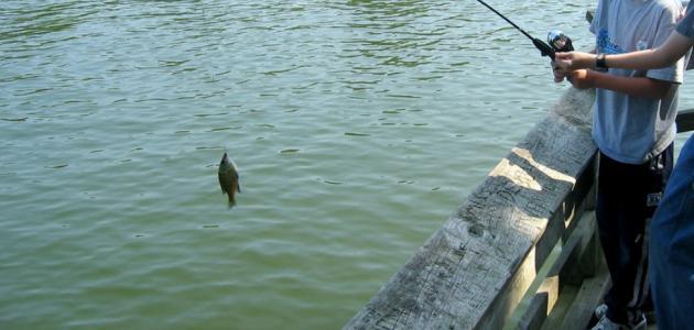 أدوات صيد الأسماك