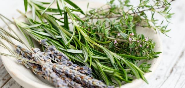 علاج فطريات المعدة بالاعشاب