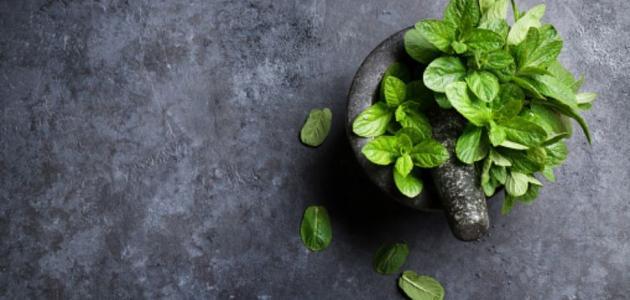إزالة الشحوم من البطن بالأعشاب