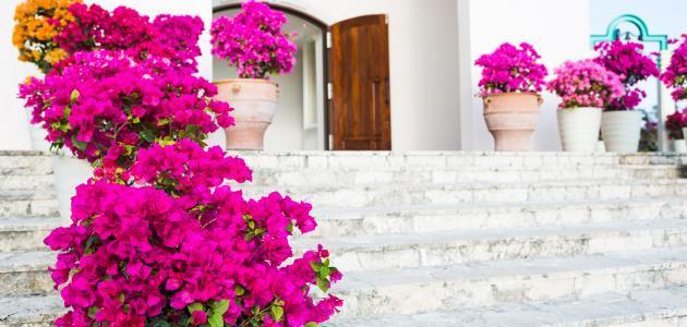 ما الفرق بين الزهرة والوردة