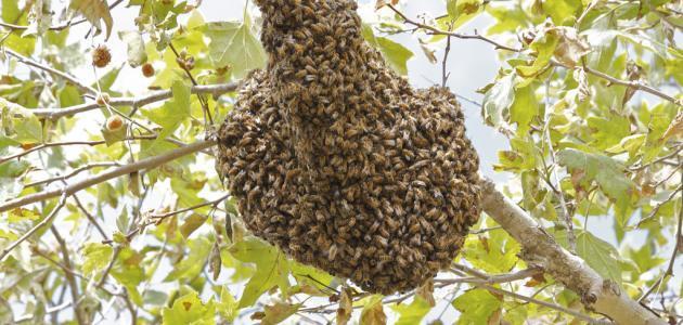 ما اسم بيت النحل