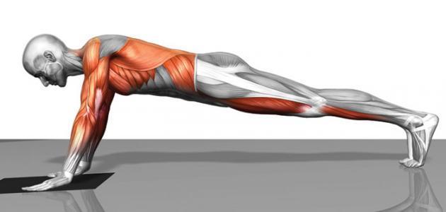أسباب عدم ظهور عضلات البطن