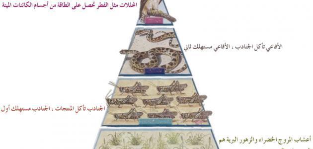 مفهوم السلسلة الغذائية