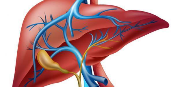 ماهي اعراض تضخم الكبد