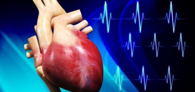 مكونات القلب في جسم الانسان