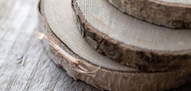 الفرق بين الخشب واللحاء