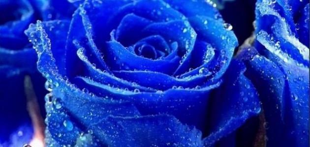 ماذا يدل اللون الازرق