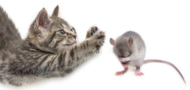 كيف تصنع مصيدة فئران