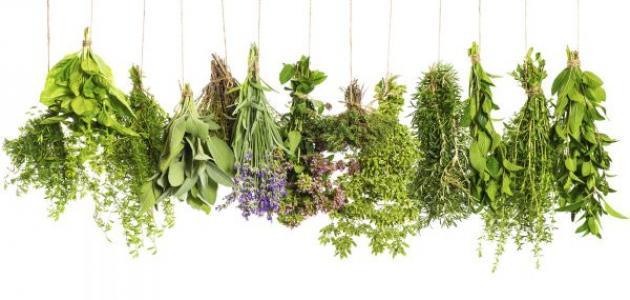 زيادة هرمون الاستروجين بالاعشاب