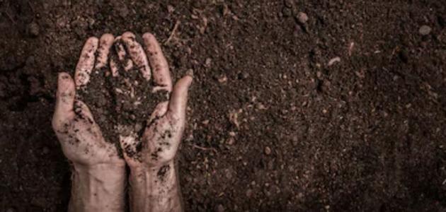 أهمية النيتروجين في زيادة خصوبة التربة