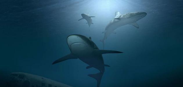 سمك القرش: أماكن وجوده وأبرز الحقائق عنه