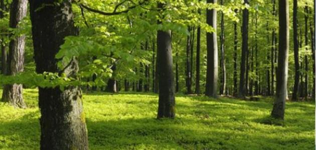 المحافظة على الغابات