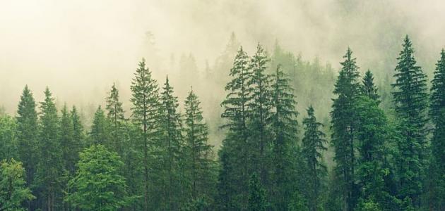 ما هي أشكال الأشجار؟