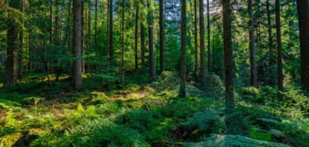 بحث حول الغابات