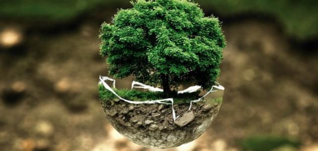 المحافظة على الثروة البيئية