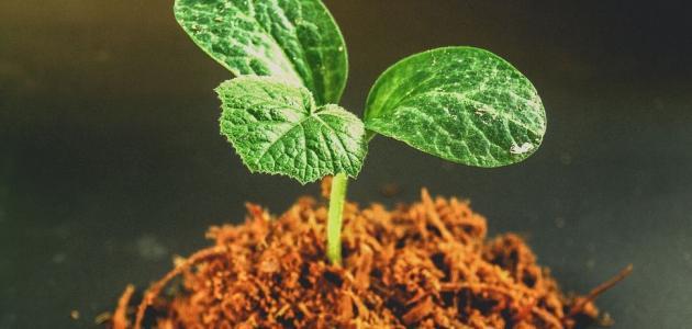 طرق زراعة نباتات الزينة