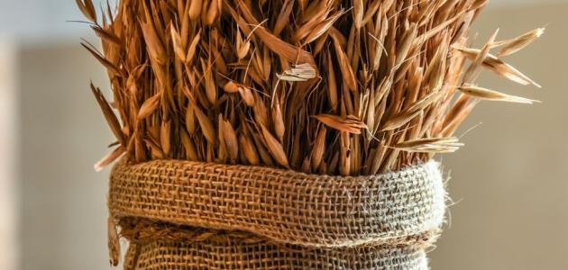 أفضل طرق زراعة القمح