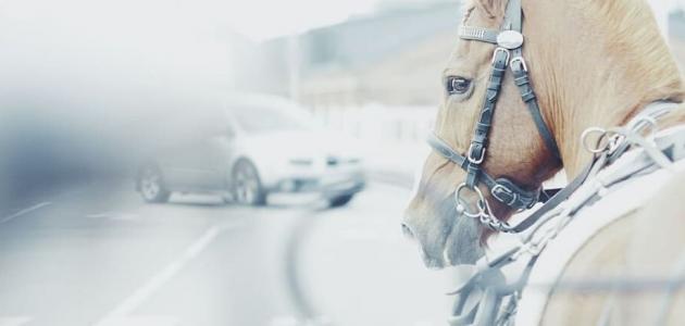 لماذا نعبر عن قوة السيارة بعدد الأحصنة؟