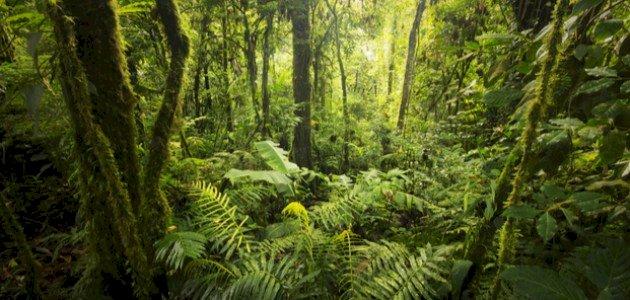 التكاثر الخضري: أهميته وأنواعه