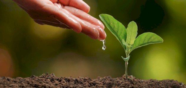 أشهر مشكلات الزراعة في الوطن العربي وحلولها