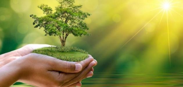 عبارات عن المحافظة على البيئة