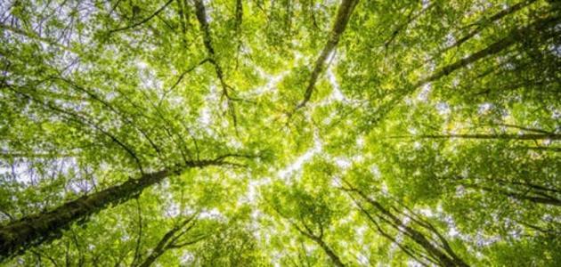 ماذا يسمى صوت اوراق الشجر