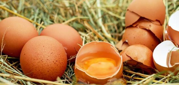 فوائد اكل البيض ني - حياتكَ