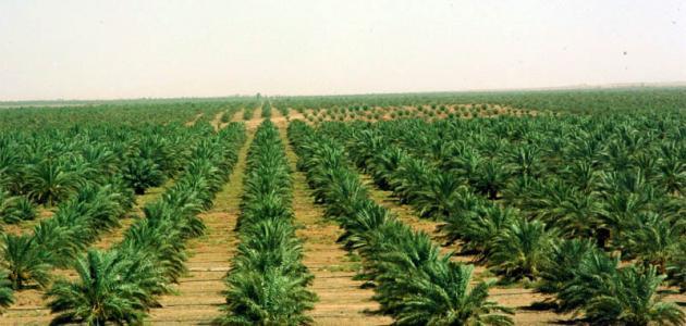 العوامل المؤثرة في الزراعة